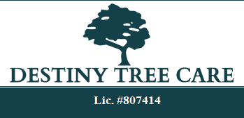 Sacramento Tree Services Tree Trimming Tree Removal Tree Pruning Stump Grinding Tree Preservation Hauling Cleanup 24/7 Emergency Tree Services Citrus Heights CA Destiny Tree Care