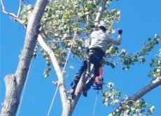 Tree Trimming Sacramento Tree Services Tree Trimming Tree Removal Tree Pruning Stump Grinding Tree Preservation Hauling Cleanup 24/7 Emergency Tree Services Citrus Heights CA Destiny Tree Care