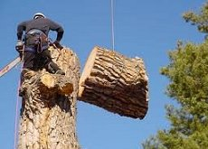 Tree Removal Sacramento Tree Services Tree Trimming Tree Removal Tree Pruning Stump Grinding Tree Preservation Hauling Cleanup 24/7 Emergency Tree Services Citrus Heights CA Destiny Tree Care