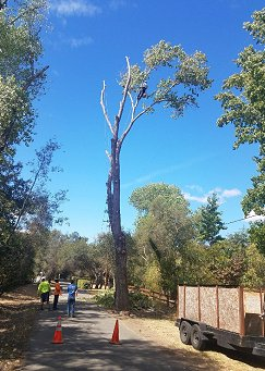 Tree Removal Services Orangevale CA - Tree Trimming Tree Removal Tree Preservation Stump Removal Stump Grinding