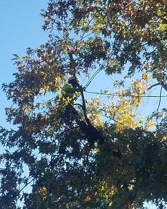 Tree Services Citrus Heights CA - Tree Trimming Citrus Heights Tree Removal Citrus Heights Tree Preservation Citrus Heights Stump Removal Citrus Heights Stump Grinding Citrus Heights Tree Pruning Citrus Heights